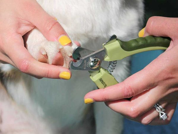 Best Dog Nail Clippers for Thick Nails